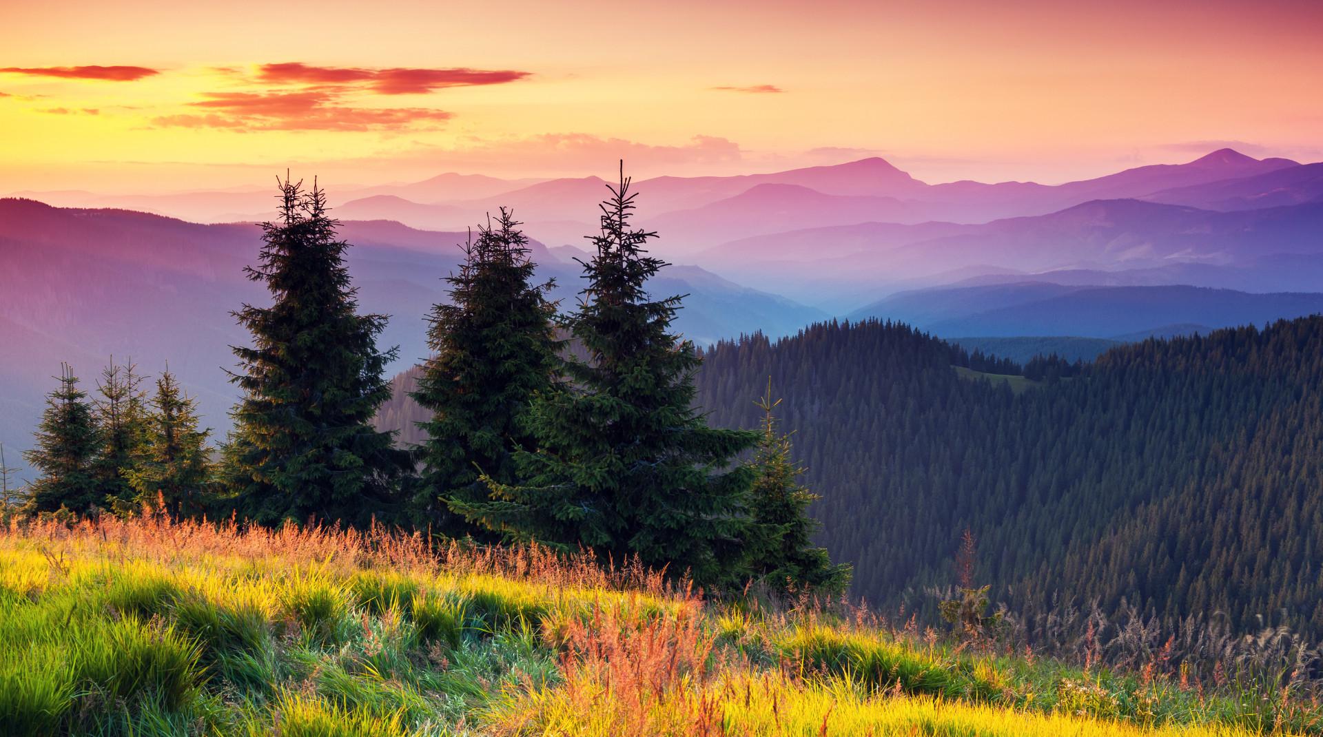 Čekají nás zelené zítřky? Co přinese Zelená dohoda pro Evropu Česku?